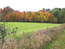 CANADA LAND, 160 AC., ONTARIO FORECLOSURE