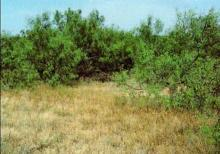 TX LAND, 320 AC., FORECLOSURE
