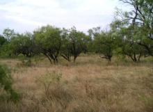 TX LAND, 640 AC., FORECLOSURE