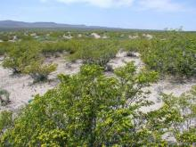 NM LAND, LUNA COUNTY, INVEST/RETIRE! FORECLOSURE