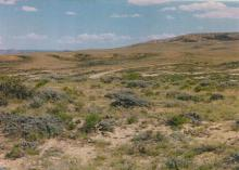 NV LAND, 39.28 AC., LARGE ACREAGE! FORECLOSURE