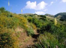 CA LAND, 2.50 AC., FORECLOSURE