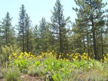 CA LAND, 1.15 AC., CALIF. PINES, FORECLOSURE