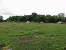 TX LAND, 40 AC., LOVING COUNTY, FORECLOSURE