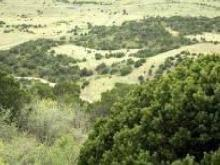 NM LAND, 10 AC., LUNA COUNTY
