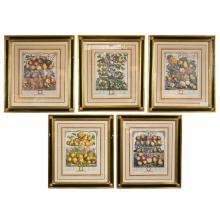 Set of 5 Framed Prints of Fruit