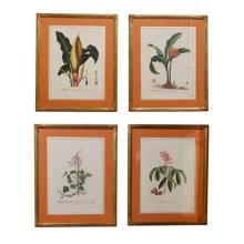 Set of 4 Botanial Prints