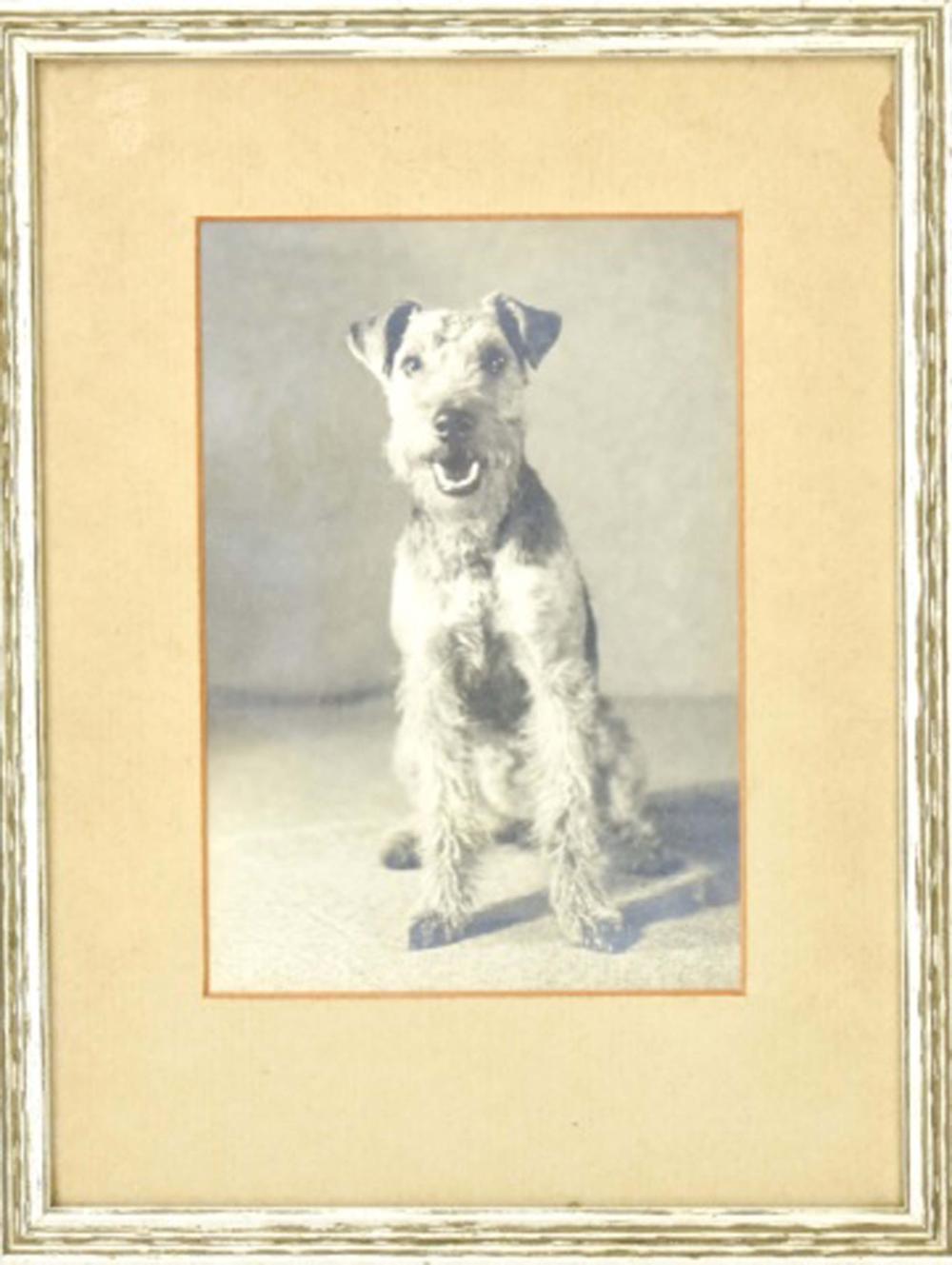 Antique C 1900 Framed Photograph of a Dog