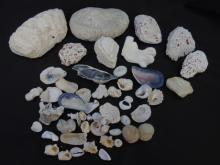 Group of Vintage Various Corals & Sea Shells