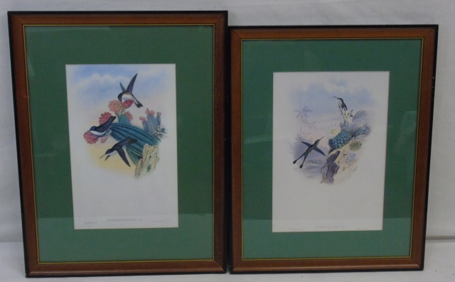 Pair Vintage Ornithological Hummingbird Prints