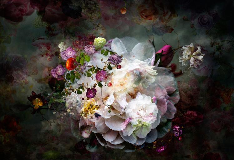 Solstice 11 - Floral Photograph