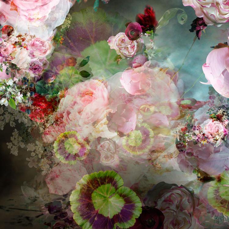 Pink Storm #2 - Floral Photograph