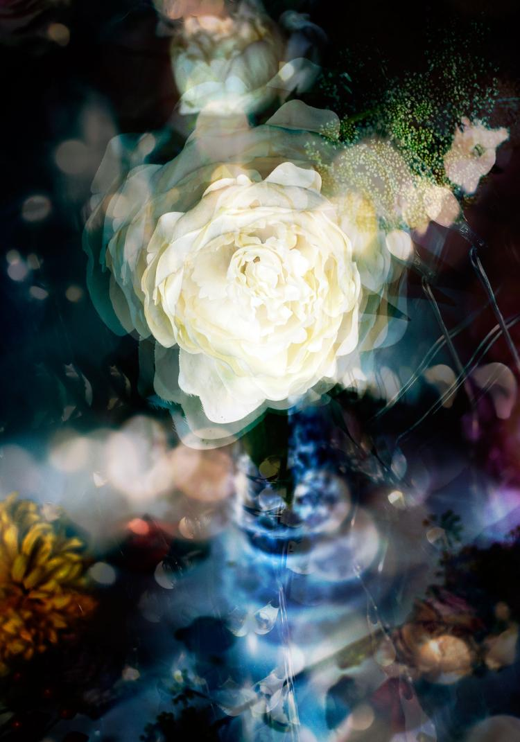 Petites Natures #23 - Floral Photograph