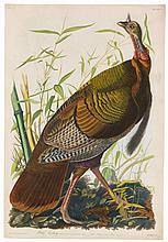 John James Audubon, Plate 1: