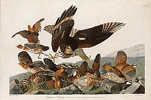 John James Audubon, Plate 76: