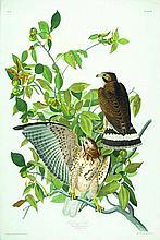 John James Audubon, Plate 91: