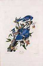 John James Audubon, Plate 102: