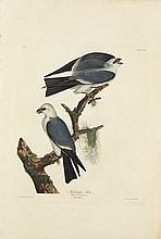 John James Audubon, Plate 117: