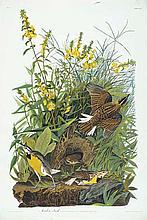 John James Audubon, Plate 136: