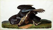 John James Audubon, Plate 106: