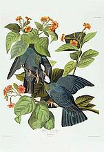 John James Audubon, Plate 177: