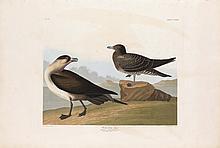 John James Audubon, Plate 272: