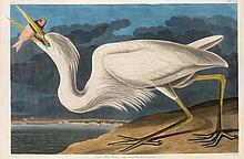 John James Audubon, Plate 281: