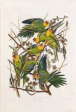 John James Audubon, Plate 26: