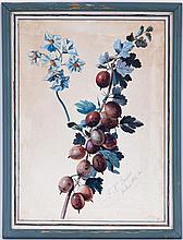 Franz Xaver Gruber (1801-1862), Etudes de prunes et pruneaux, deux aquarelles et gouache sur papier, signées et datées 1842, 33x24 cms