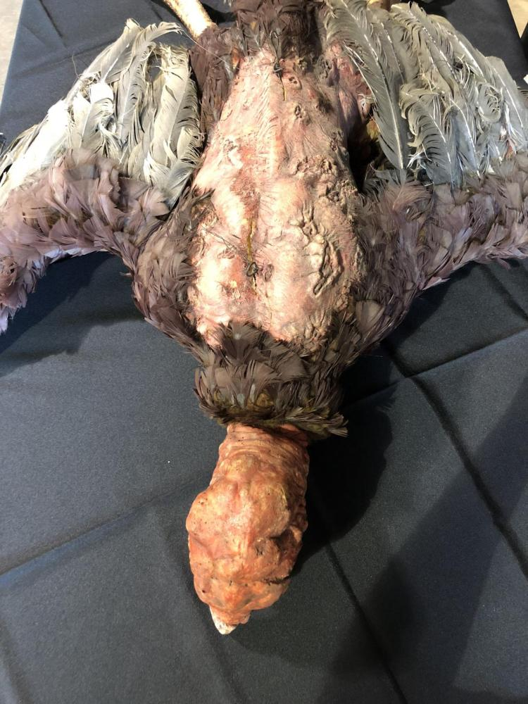 Lot 182: The Rage (2007) - Screen Used Vulture