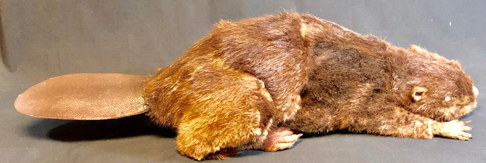 Lot 152: Zombeavers (2014) - Life-Size Zombie Beaver