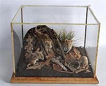 A CASED TAXIDERMY STUDY OF FOUR FIELD MICE modelled in a naturalistic glass