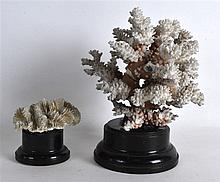 TWO EARLY 20TH CENTURY CARVED CORAL SPECIMANS upon ebonised bases. Largest