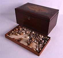 AN INTERESTING COLLECTION OF SNAIL SHELLS contained within a George III style mahogany shell inlaid box. 12Ins wide.