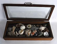 A CASED COLLECTION OF EARLY FOSSILS AND SHELLS. (qty)