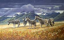 Jock Elmsley (1910-1980) British, oil on canvas, 'Zebras'. 3Ft 6ins x 2ft 1