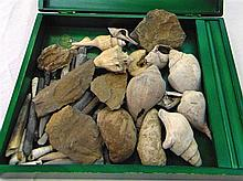 A QUANTITY OF FOSSILS, of varying size and form. (Qty)