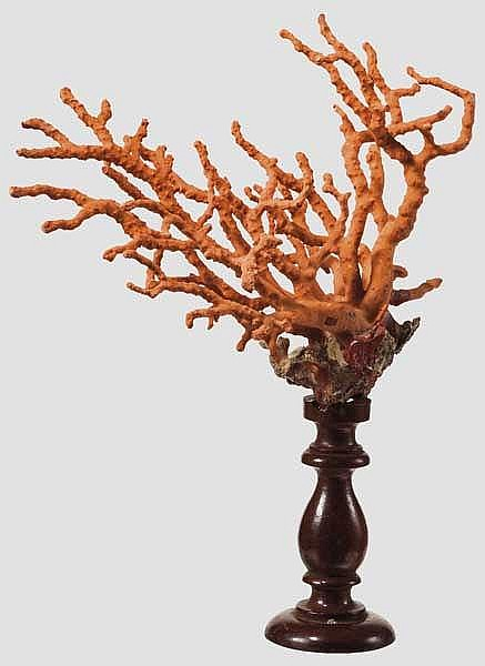 Korallenbaum, 19. Jhdt.