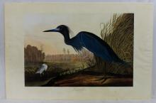Birds of America After John James Audubon