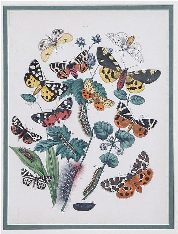 Noel H. Humphreys, (British, 1810-1879), A group of four prints of Butterflies and Moths