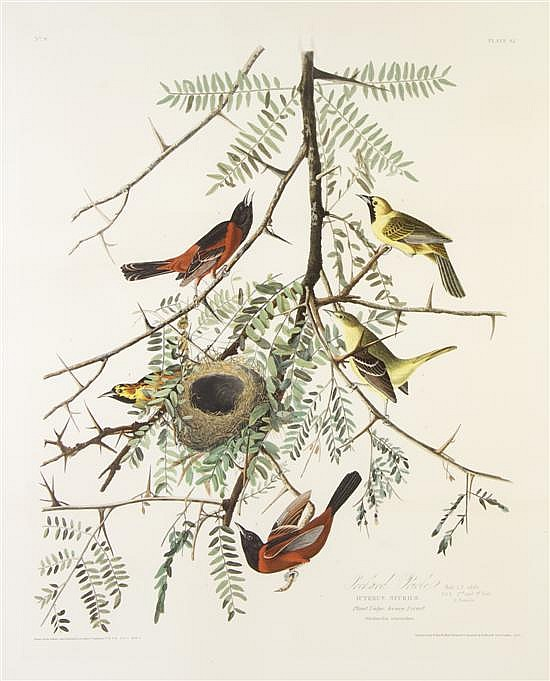 (AUDUBON, JOHN JAMES, after) HAVELL, ROBERT. Orchard Oriole, Plate 42. London, 1828. On J. Whatman Turkey Mill paper, n.d.