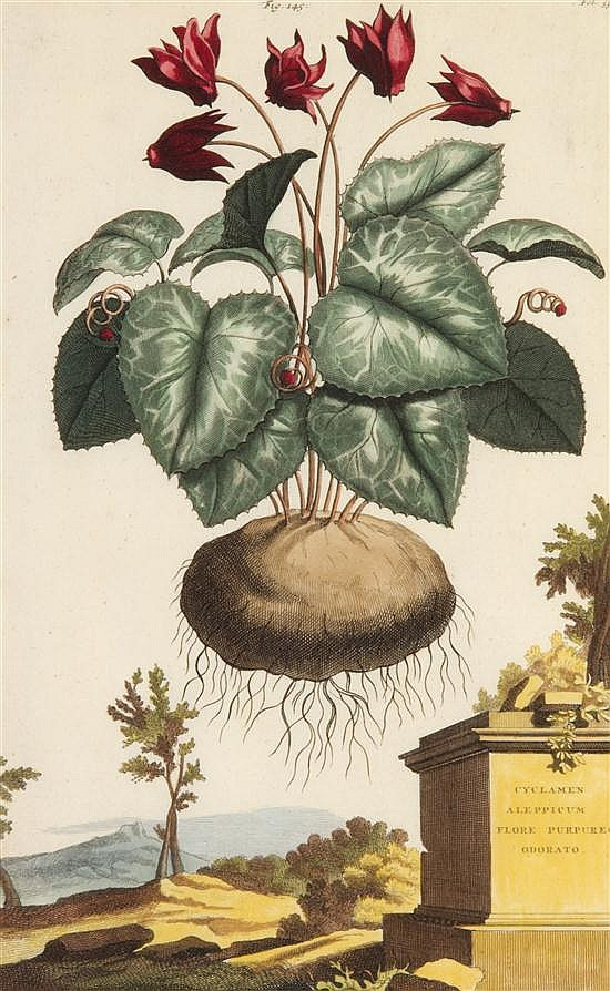 (BOTANY, DUTCH) MUNTING, ABRAHAM. Three hand-colored engravings from