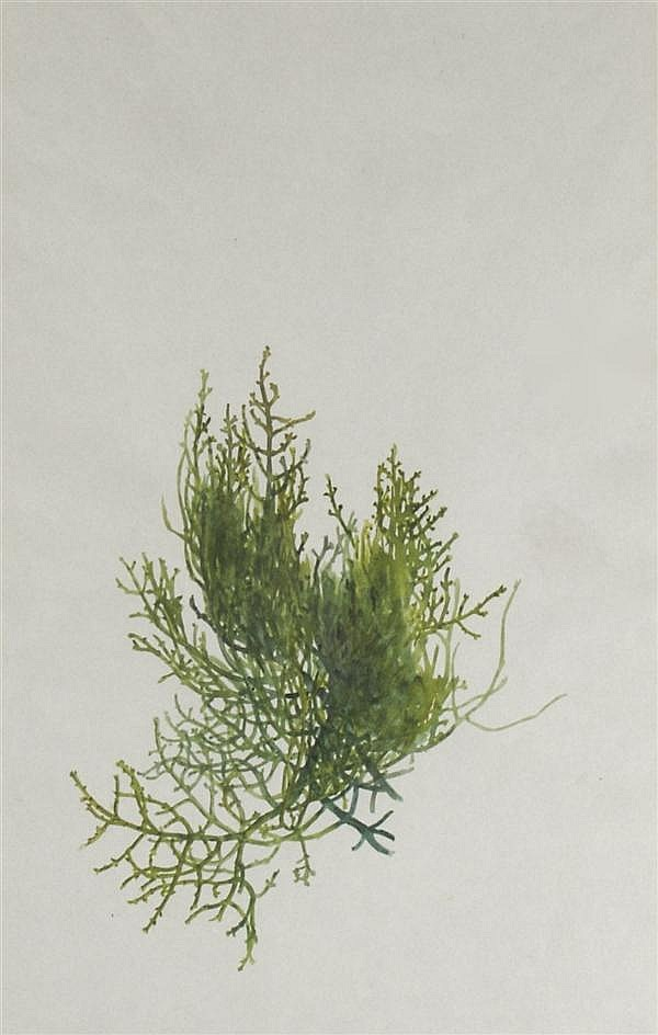 Albert R. Valentien, (American 1862-1925), Botanical Study #9