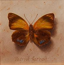 Patrick Farrell, (Wisconsin, b. 1945), Nymphalidae - Agrias/Amydon, 2001
