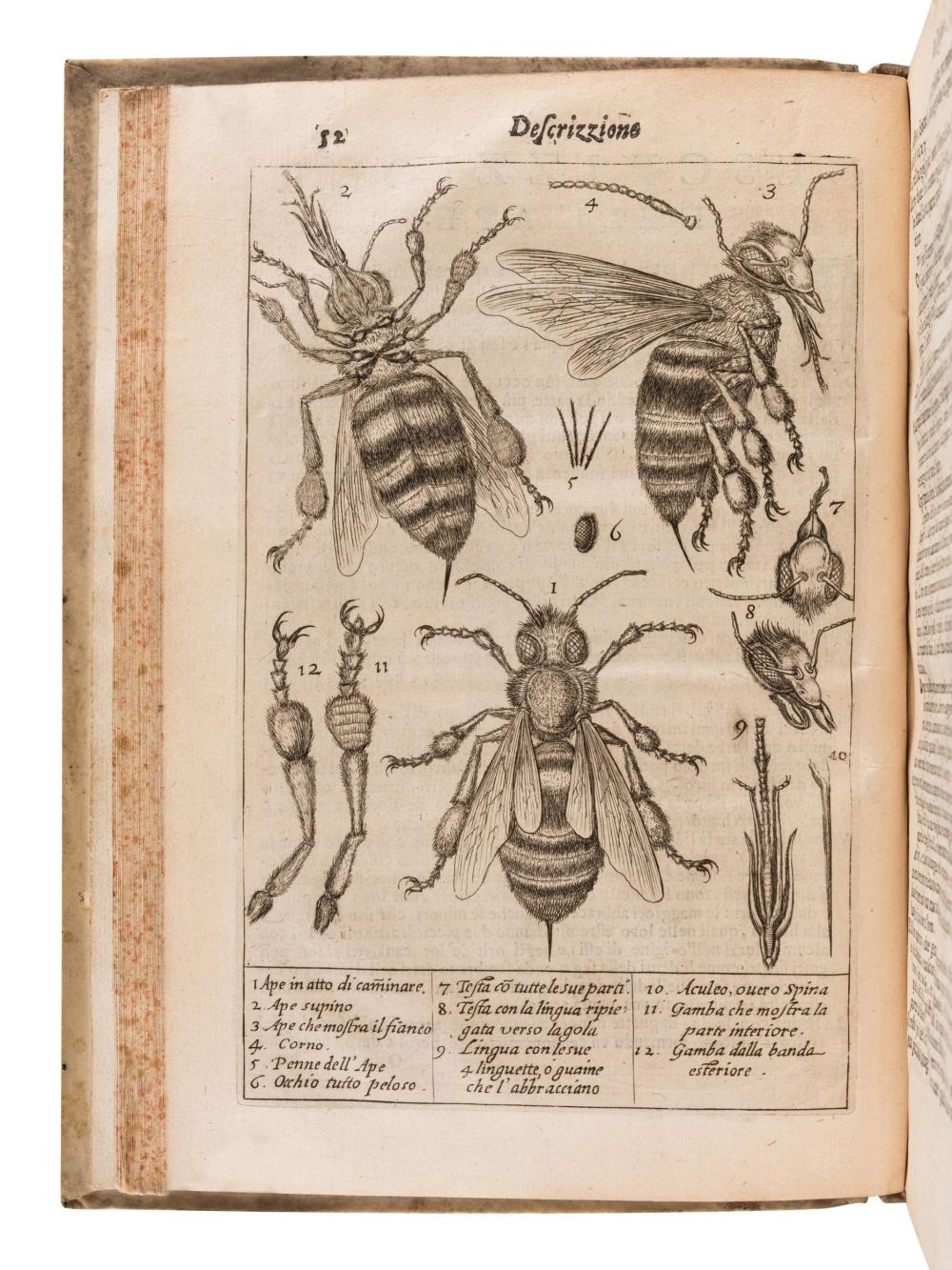 PERSIUS FLACCUS, Aulus (34-62). Persio tradotto in verso sciolto e dichiarato. Francesco Stelluti (1577-1653), translator. Rome: G. Mascardi, 1630.