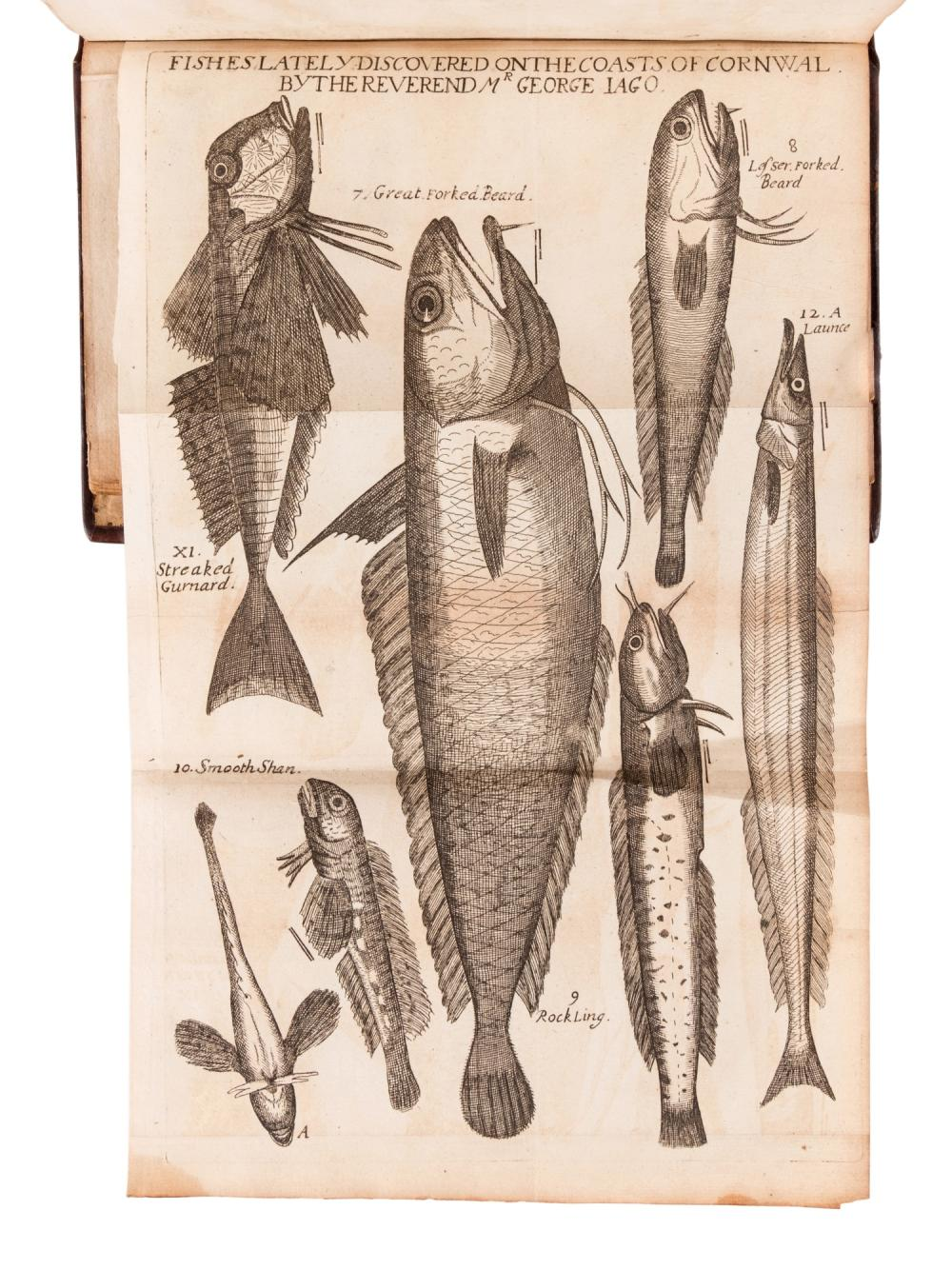 RAY, John (1628-1705). Synopsis Methodica Avium & Piscium. London: William Innys, 1713.