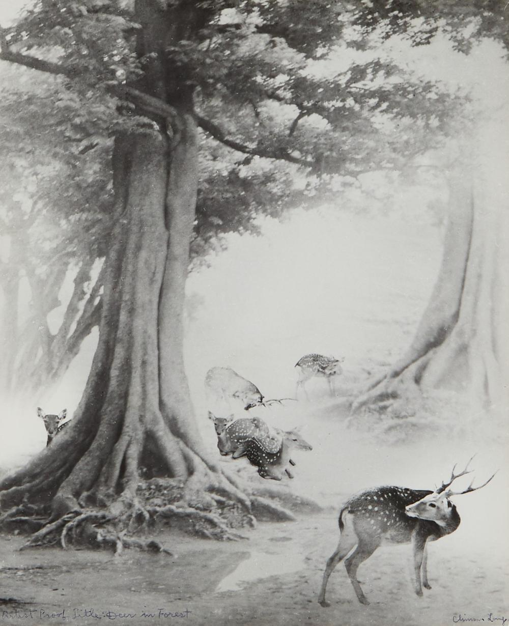 """Chin San Long Photograph """"Deer in Forest"""" Signed Silver Gelatin"""
