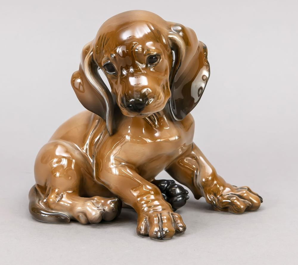 Sitting dachshund puppy, Rosen