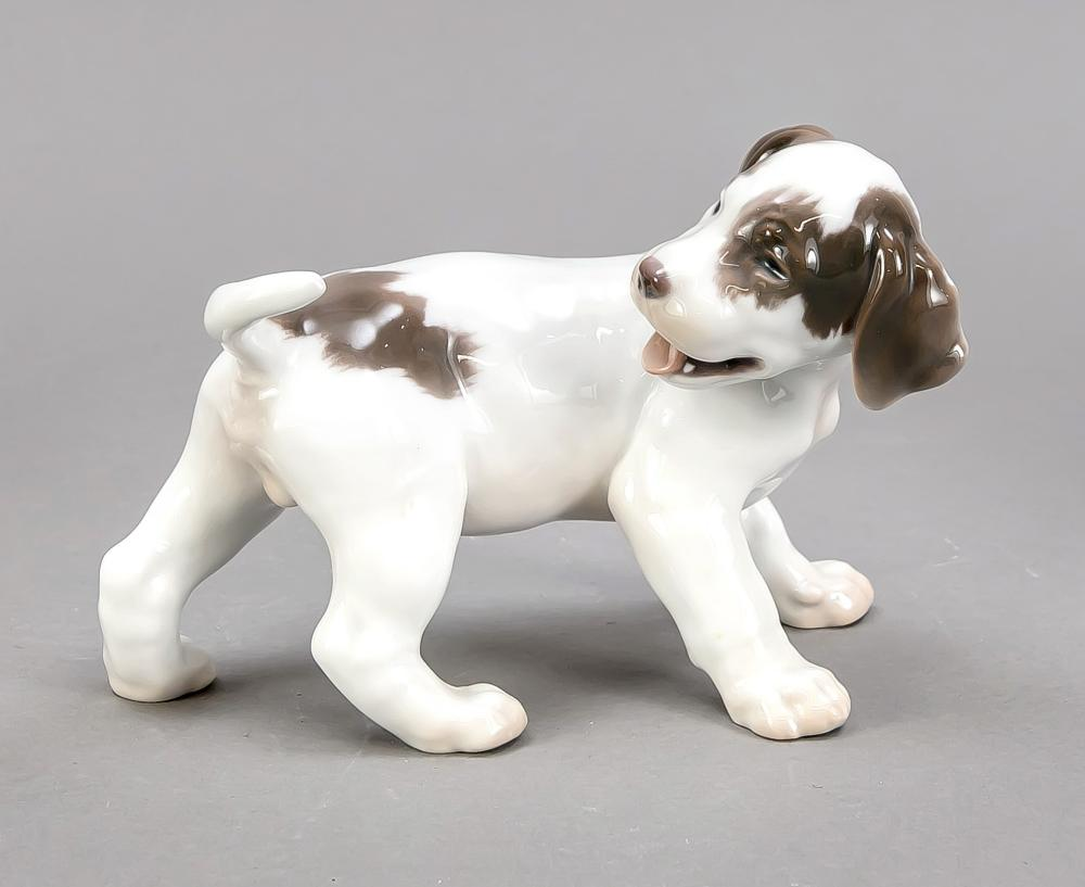 Playful pointer puppy, Bing &