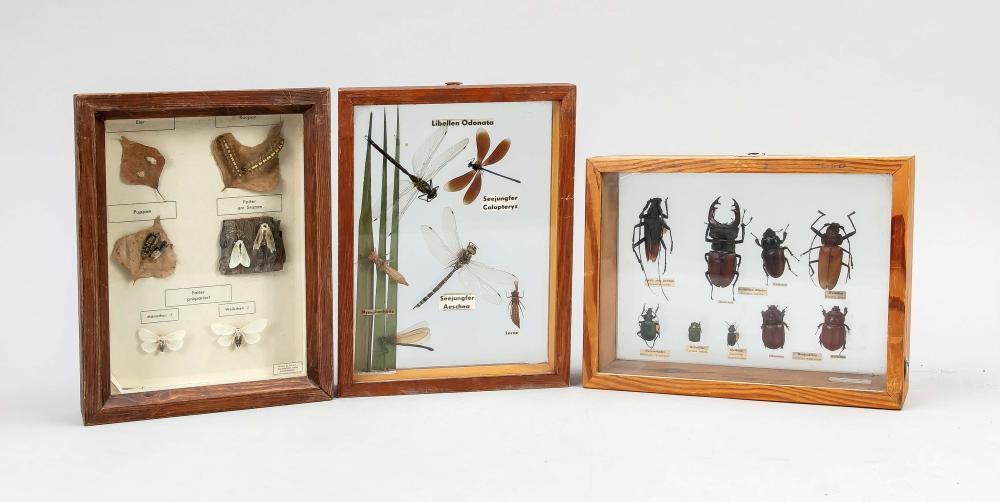 3 entomological showcases, 1st ha